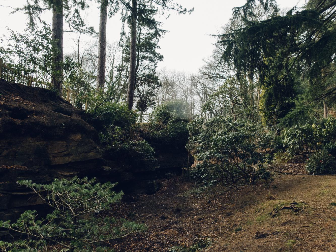 Haarkon Whinfell Quarry Gardens Sheffield Plants Greenery Park Yorkshire Leaf Redwood