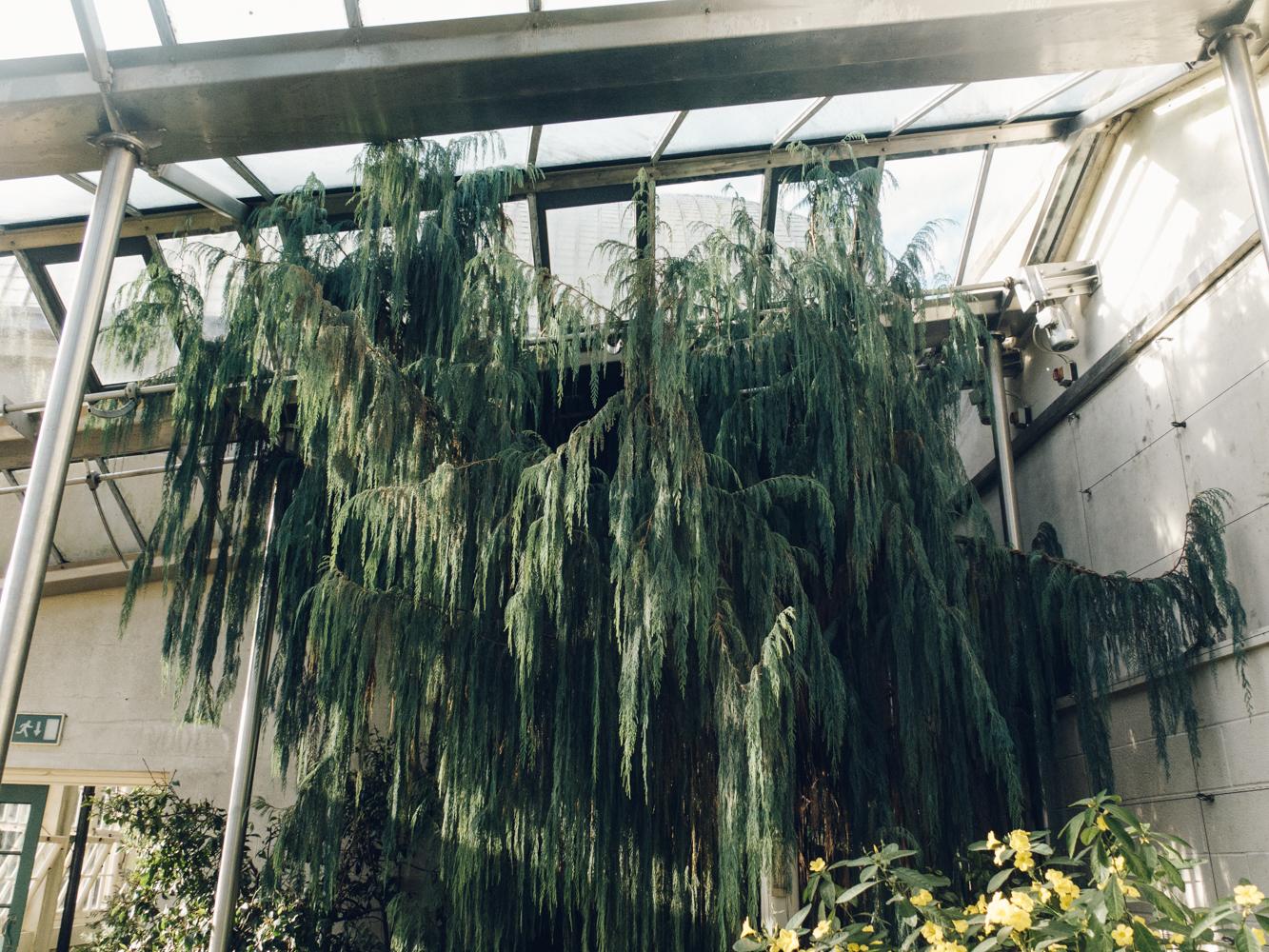 Haarkon Sheffield Botanical Gardens Glasshouse Plants Greenery