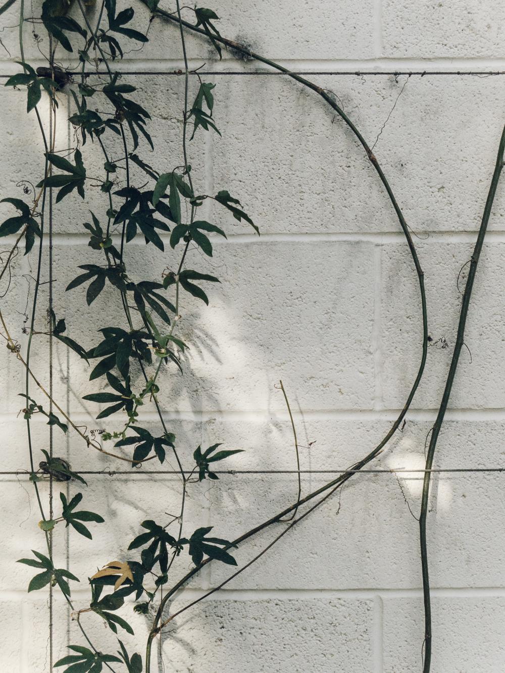 Haarkon Sheffield Botanical Gardens Glasshouse Tree Leaf Greenery