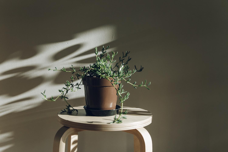 Haarkon Plants Light Sun Shadow Garden Indoor Jungle