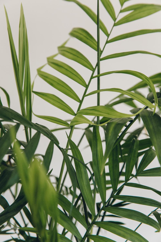 Haarkon Plants Greenery Foliage Leaf Leaves Nature