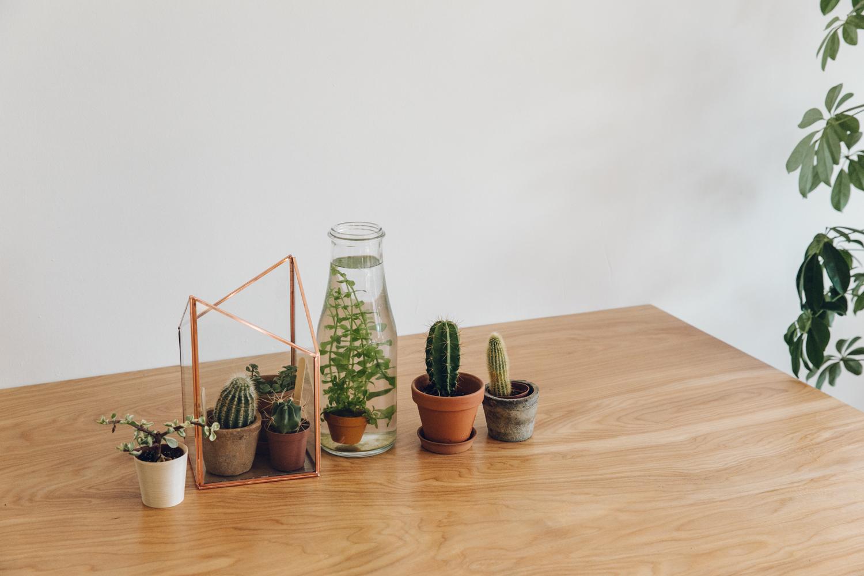 Haarkon Plants Family Portrait Copper Ikea Cactus