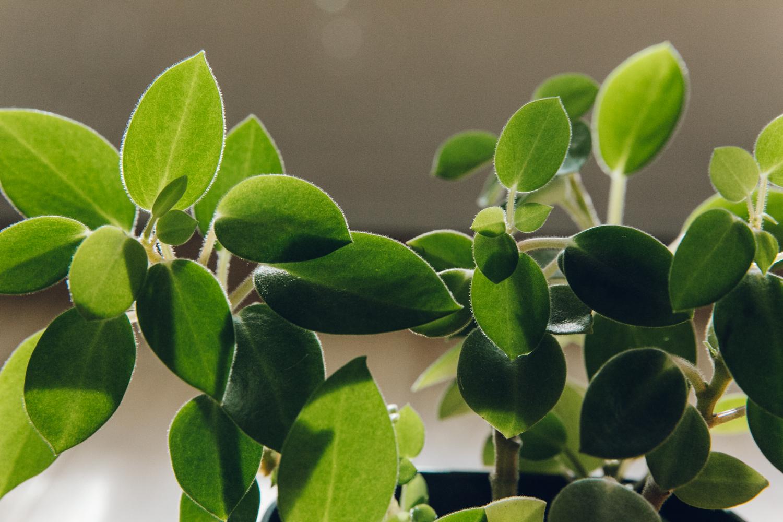 Haarkon Light Leaf Sun