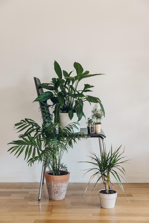 Haarkon Plant Chair IKEA