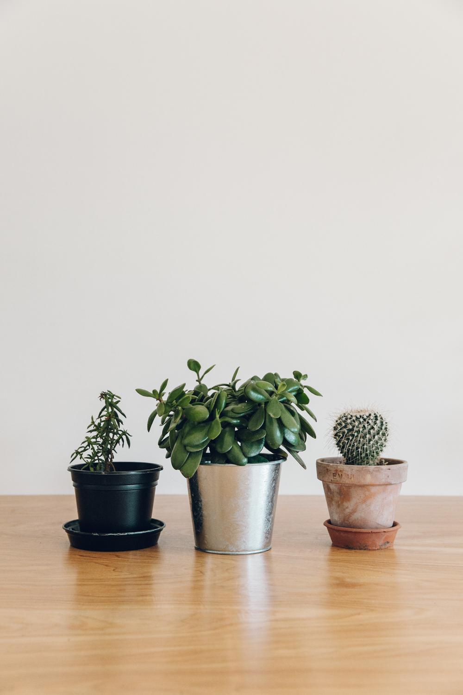 Haarkon Plants Cactus Succulent