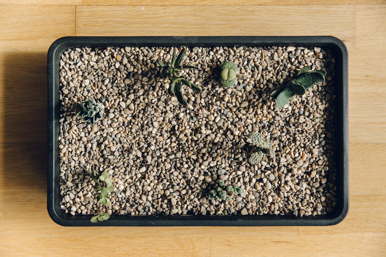 Haarkon Cactus Garden