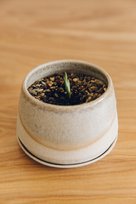 Haarkon Plants Ceramics Grey suit clay