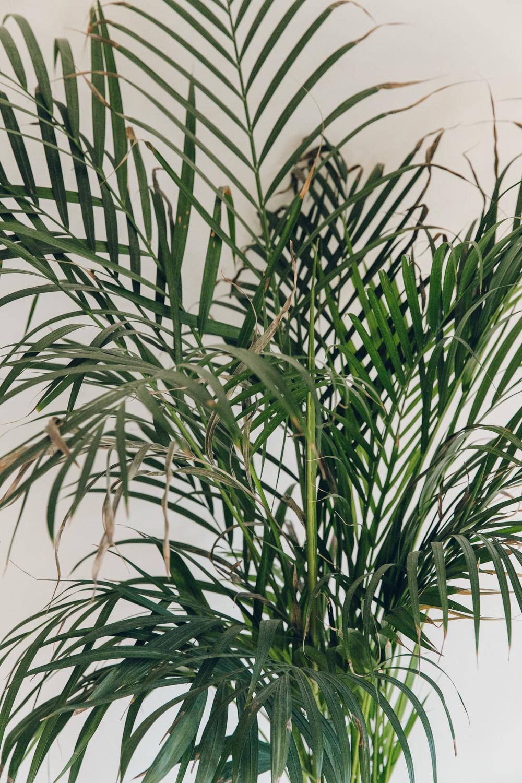 Haarkon Plants Leaves Leaf Green Palm