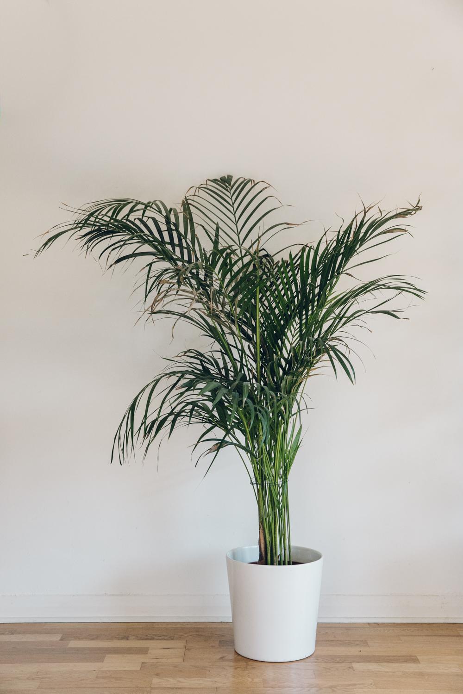 Haarkon Palm Tree Leaves Plants