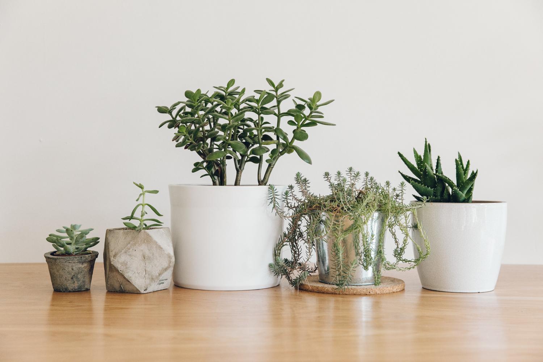 Haarkon Line-up Plants Family Green