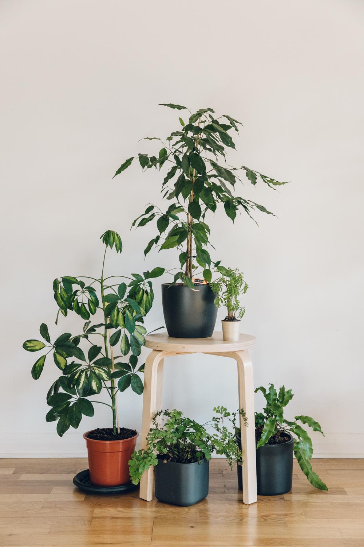 Haarkon Plants Tour Interior