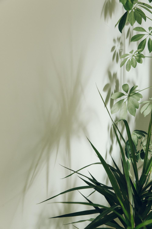 Haarkon Plants Leaf