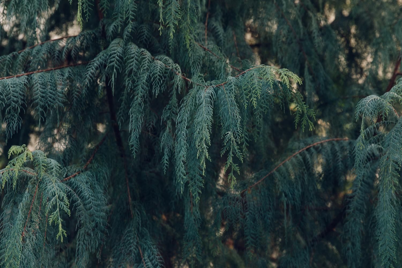 Haarkon Sheffield Botanical Gardens Pavilion Glasshouse Greenhouse Victorian Plants Greenery Park Cypress Tree