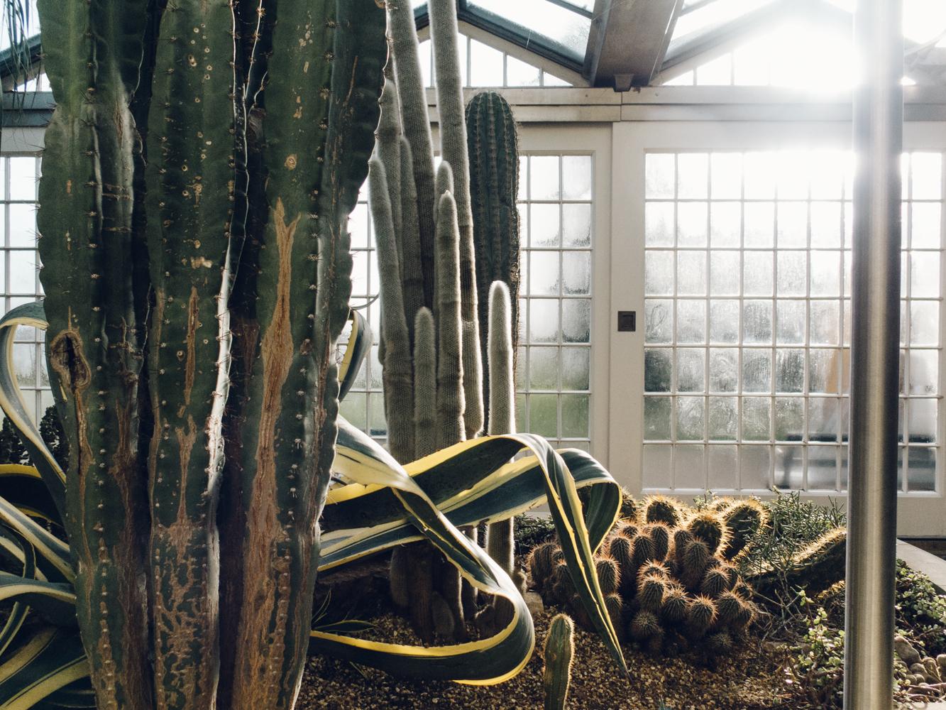 Haarkon Sheffield Botanical Gardens Pavilion Glasshouse Greenhouse Victorian Plants Greenery Park Cacti Cactus