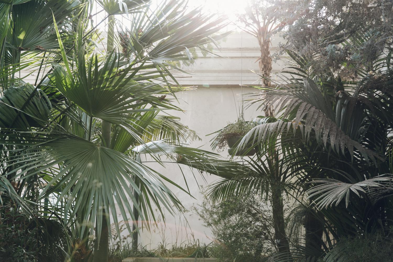 Haarkon Sheffield Botanical Gardens Pavilion Glasshouse Greenhouse Victorian Plants Greenery Park  Palm Trees Tropical