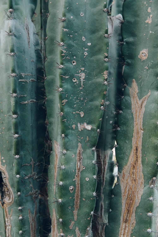 Haarkon Sheffield Botanical Gardens Pavilion Glasshouse Greenhouse Victorian Plants Greenery Park Cactus Succulent
