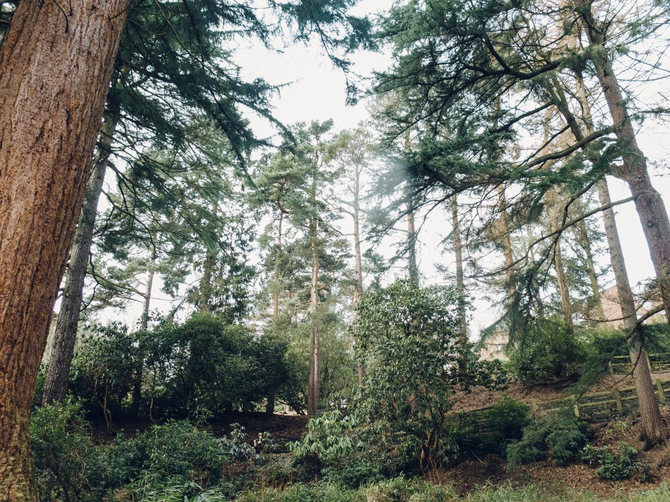 Haarkon Whinfell Quarry Gardens Sheffield Rhodedendron Travel Nature Park Redwood Sequoia