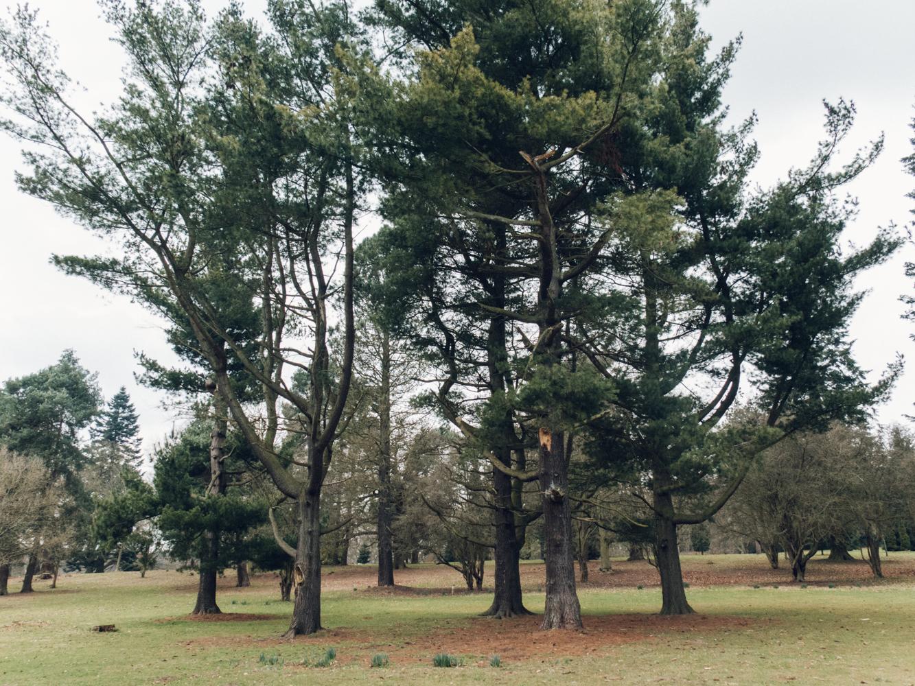 Haarkon Clumber Park Sherwood Forest National Trust Glasshouse Greenhouse Garden Plants Tree Woods Leaf