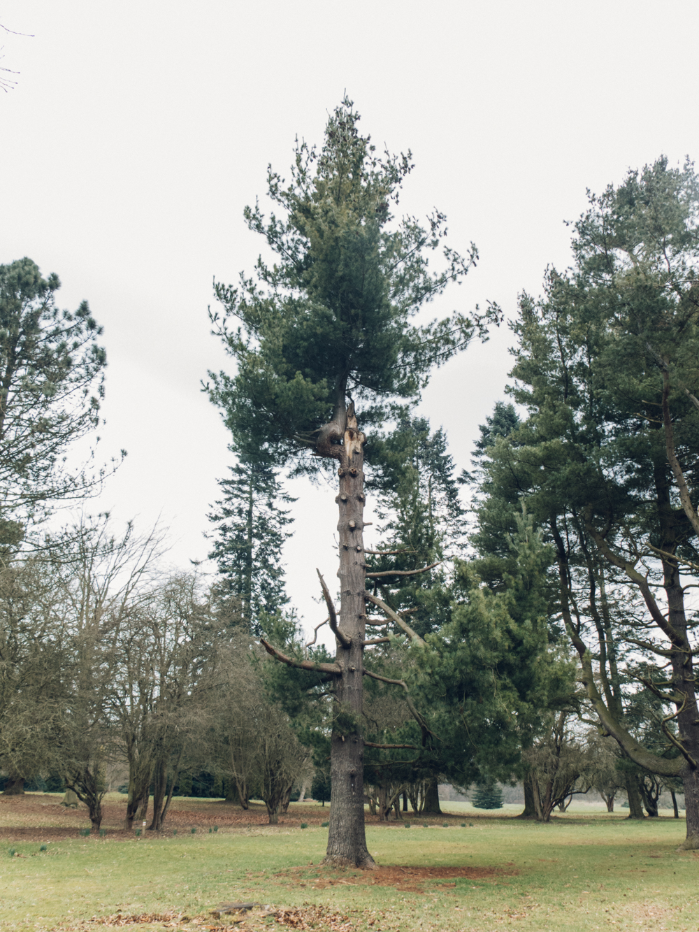 Haarkon Clumber Park Sherwood Forest National Trust Glasshouse Greenhouse Garden Plants Tree Woods Leaf Pine