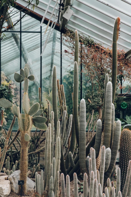 Haarkon Kew Gardens Conservatory Glasshouse Princess Wales Greenhouse Plant Cactus Cacti