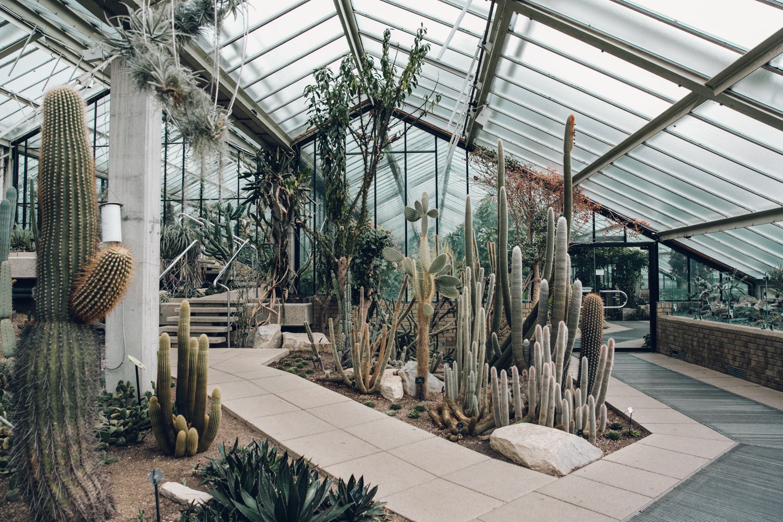 Haarkon Kew Gardens Conservatory Glasshouse Princess Wales Greenhouse Cactus Plant