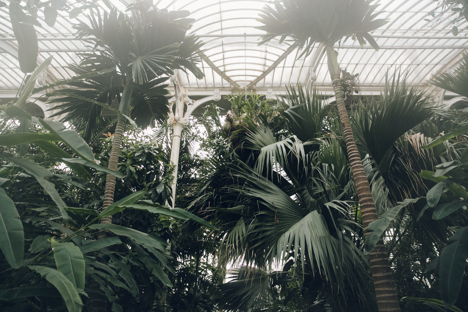 Haarkon Kew Gardens Palmhouse Palm Temperate Glasshouse Greenhouse Plants Greenery London Visit