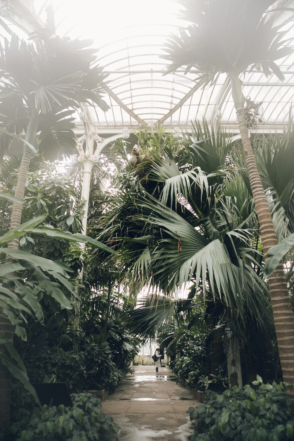 Haarkon Kew Gardens Palmhouse Palm Temperate Glasshouse Greenhouse Plants Greenery London Visit Person Tourist