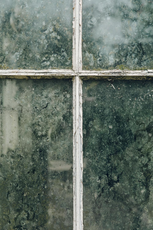 Haarkon Glasshouse Greenhouse Camellia House Conservatory Plants Nature Greenery Glass Leaf