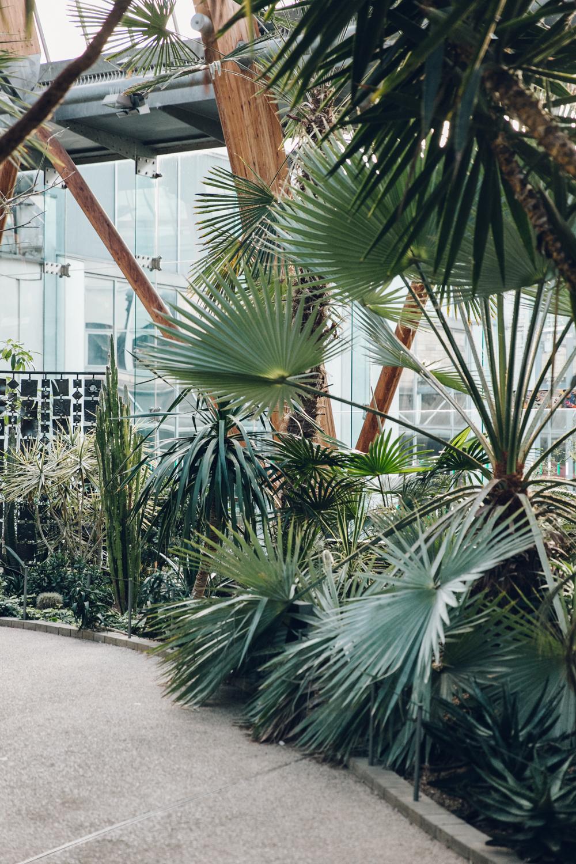Haarkon Sheffield Winter Gardens Glasshouse Greenhouse Plants Light City Palm Greenery