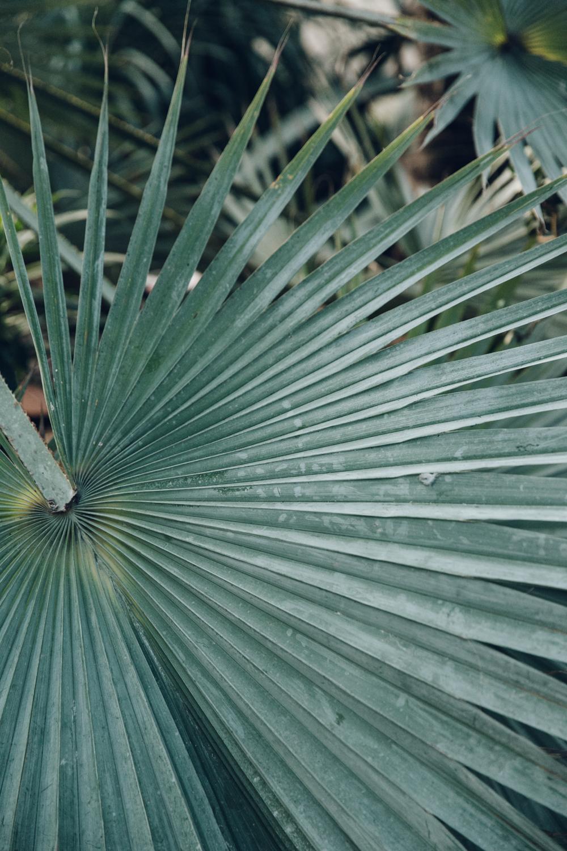 Haarkon Sheffield Winter Gardens Glasshouse Greenhouse Plants Light City Palm Leaf