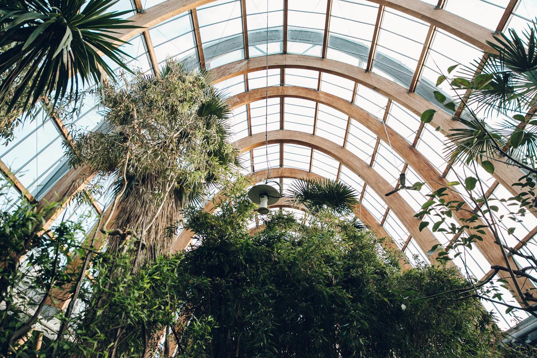 Haarkon Sheffield Winter Gardens Glasshouse Greenhouse Plants Light City Structure Architecture