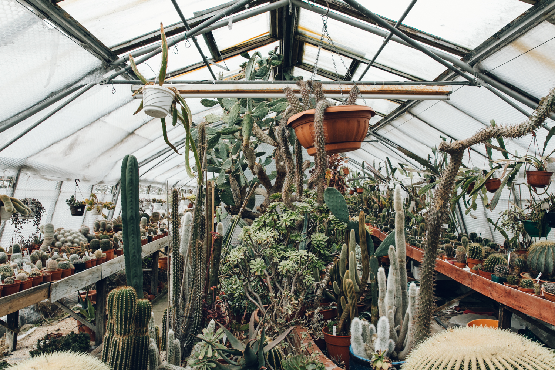 Haarkon Abbey Brook Cacti Cactus Nursery PLants Succulent Echeveria Greenhouse Glasshouse Garden