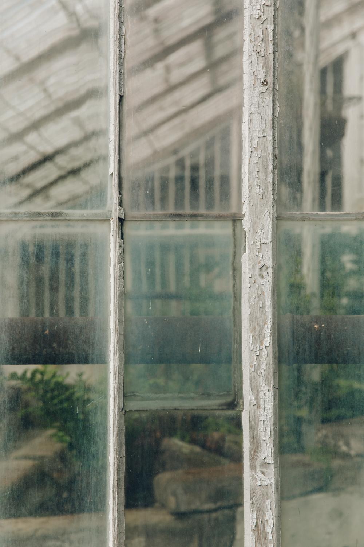 Haarkon Fernery Calke National Trust Garden Plants England glasshouse greenhouse