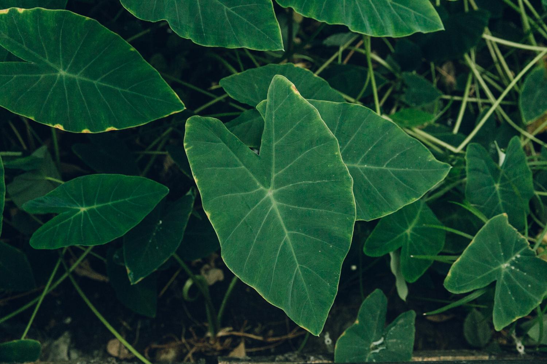 Haarkon Tropical World Leeds Yorkshire Butterfly Bird Greenhouse Glasshouse Garden Plants Jungle leaf