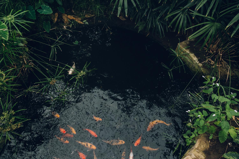 Haarkon Tropical Jungle Greenhouse Garden Glasshouse Plants