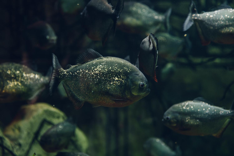 HAARKON Tropical Jungle Glasshouse Greenhouse Plants Garden fish aquatic tank
