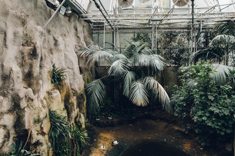 HAARKON Tropical Jungle Glasshouse Greenhouse Plants Garden birds