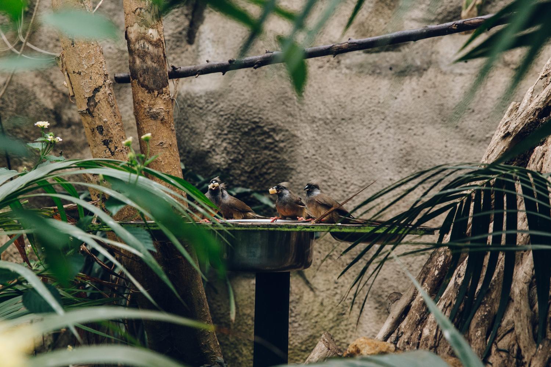 HAARKON Tropical Jungle Glasshouse Greenhouse Plants Garden birds animals zoo