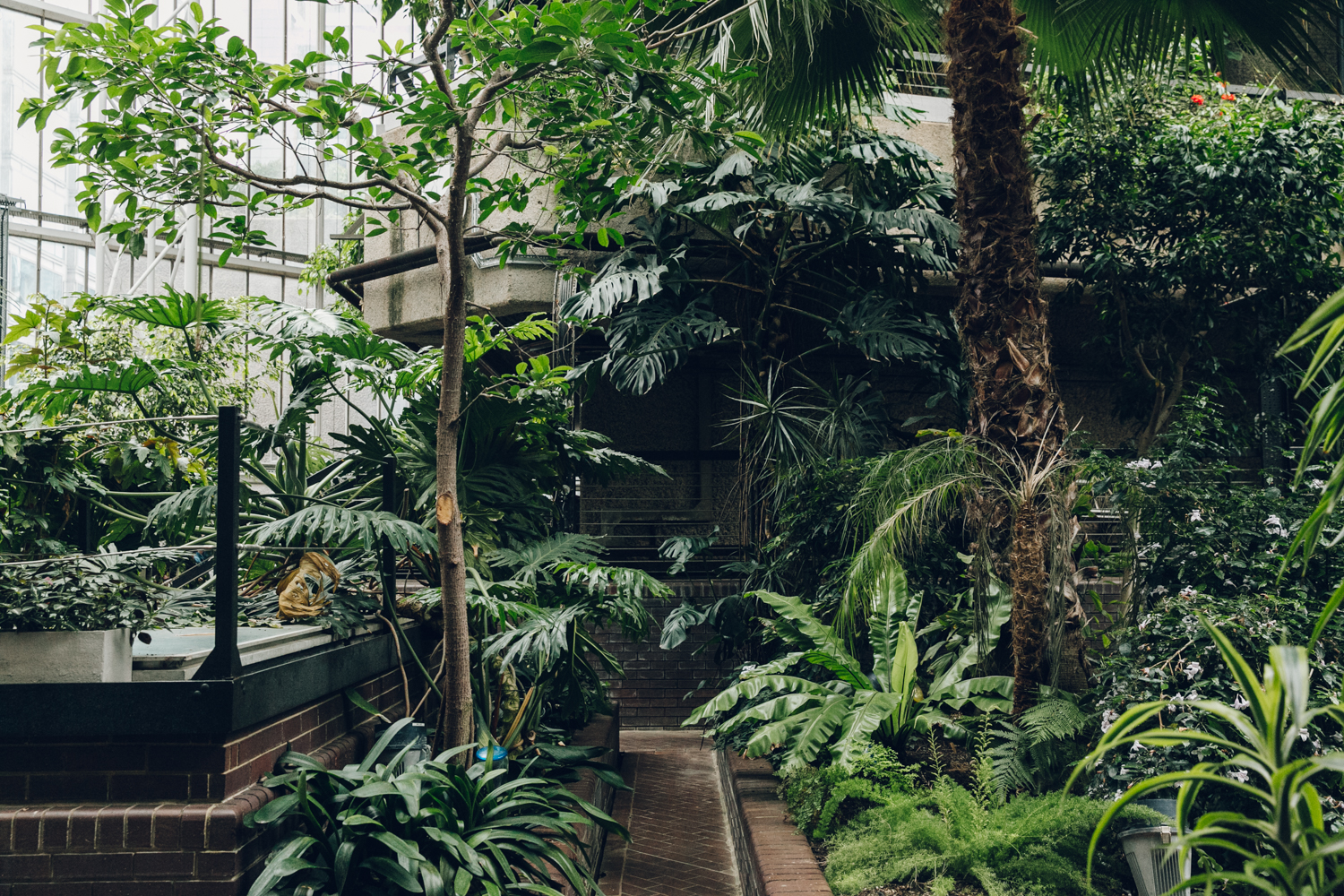 Haarkon Barbican Conservatory Greenhouse Glasshouse jungle plants green london travel concrete architecture