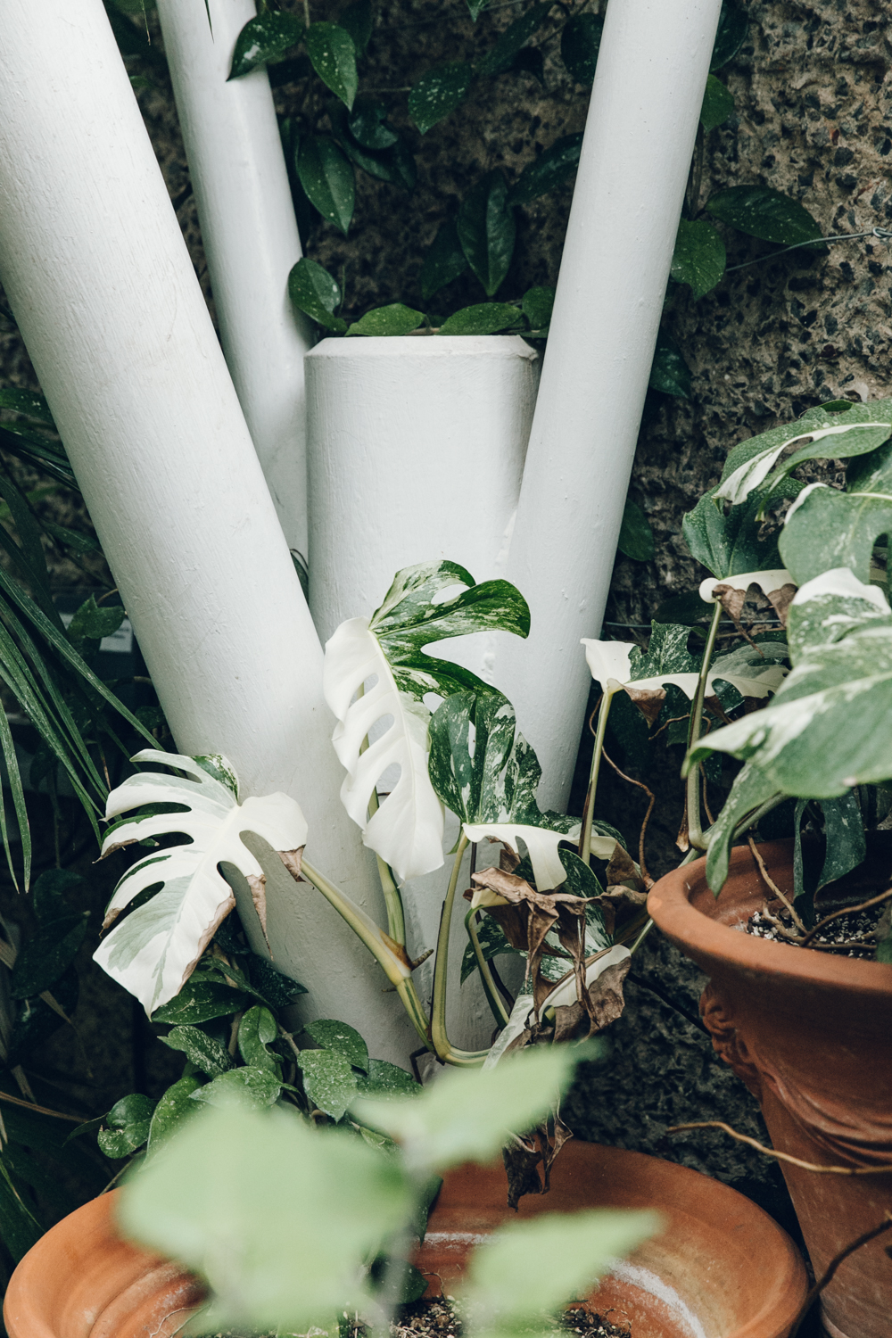 Haarkon Barbican Conservatory Greenhouse Glasshouse jungle plants green london travel concrete architecture monstera varigated