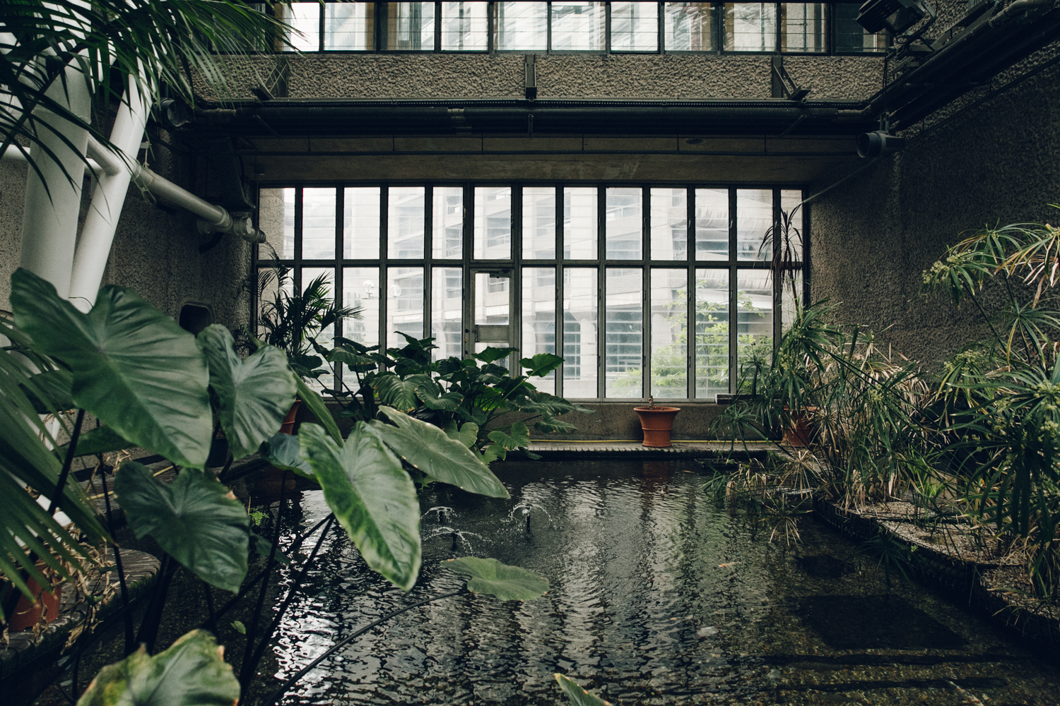 Haarkon Barbican Conservatory Greenhouse Glasshouse jungle plants green london travel concrete architecture water pond carp