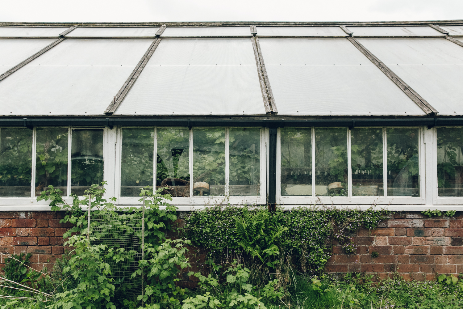 Haarkon Greenhouse Glasshouse Allotment Garden Vinery Vines Grapes Orchard plants trees leaf greenery
