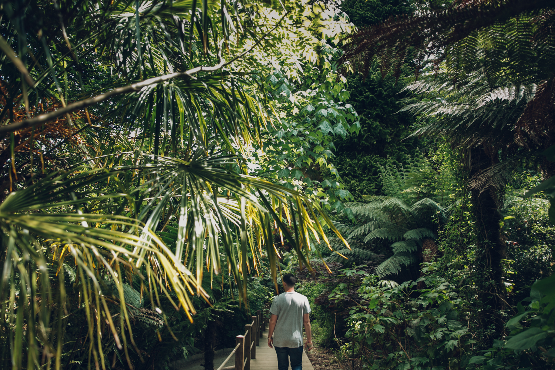 Haarkon heligan cornwall garden plants growing greenery leaf tree