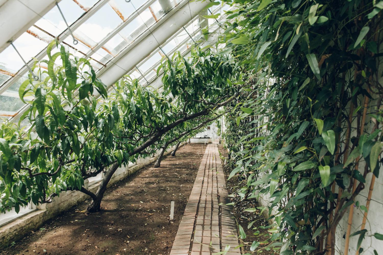 Haarkon Heligan Greenhouse Garden Cornwall England Plants Glasshouse Jungle