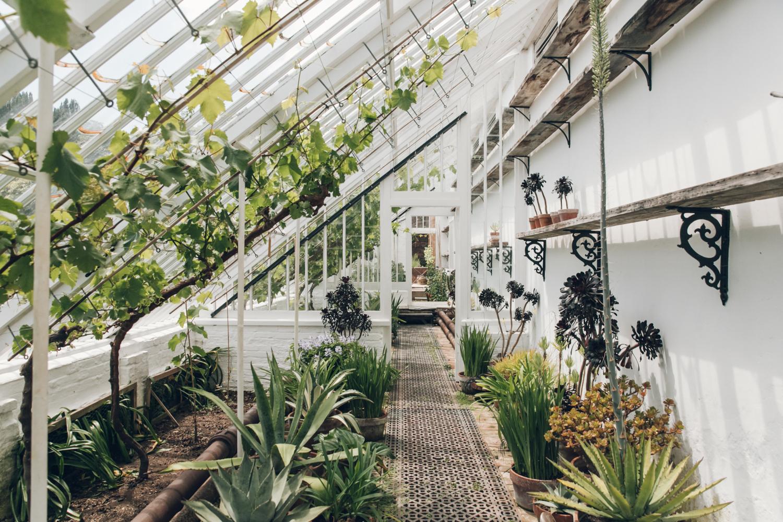 Haarkon Garden Plants Jungle greenhouse glasshouse cornwall