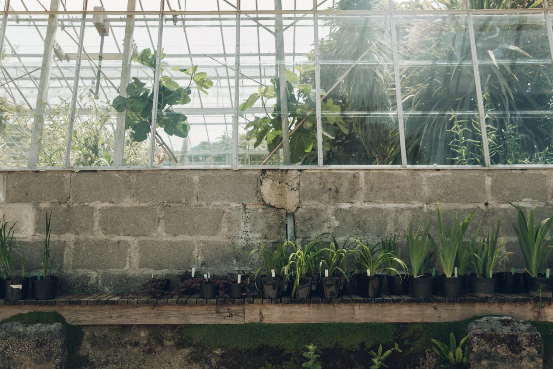 Haarkon Garden Potager Falmouth Cornwall Greenhouse Glasshouse Plants