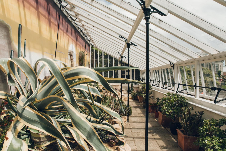 Haarkon Plants Fernery Glasshouse Greenhouse Bicton Garden Jungle cacti cactus