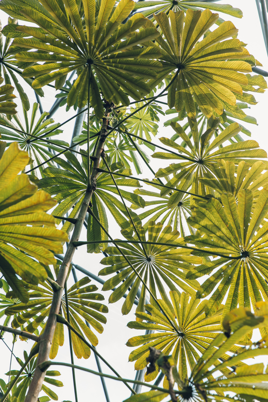 Haarkon Eden Project Biome Rainforest Jungle Glasshouse Greenhouse Garden Plants Tropical Leaf Nature
