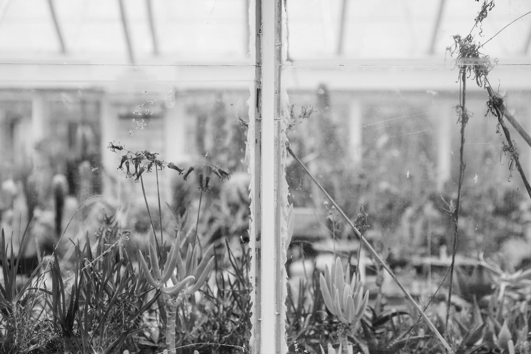 Plants through the greenhouse window