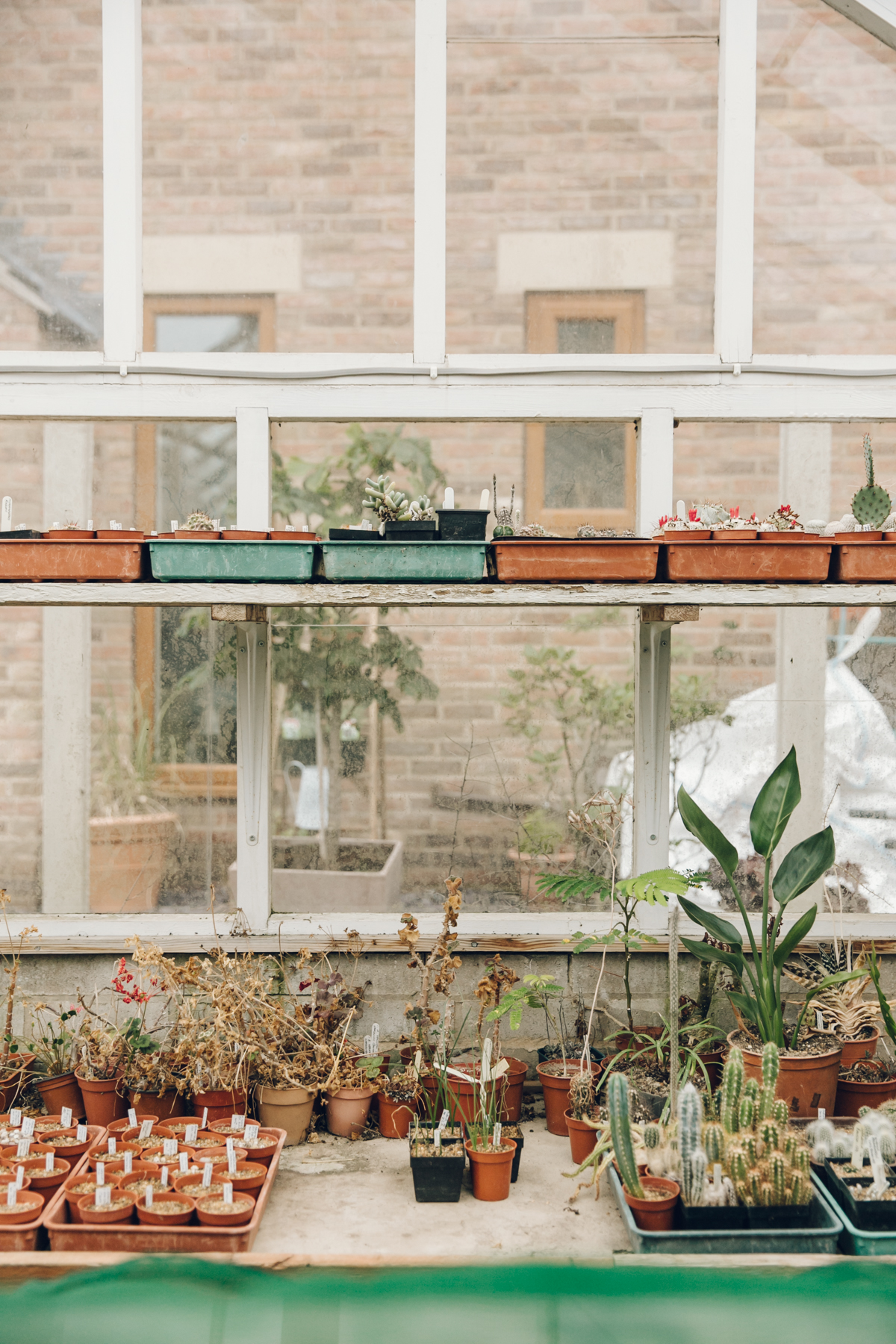 Plants on a shelf at the greenhouse window
